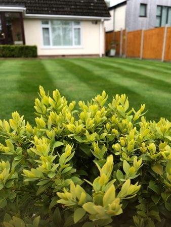 grass cutting + treatment 4