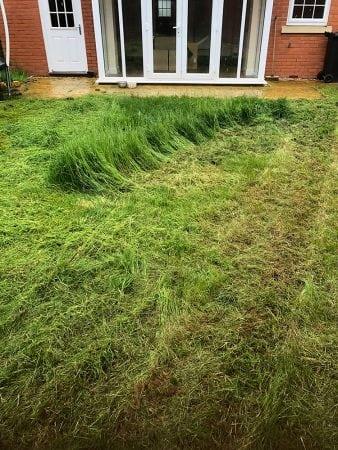grass cutting + treatment 5