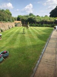 grass cutting + treatment 7