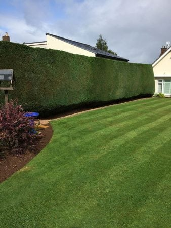 grass cutting + treatment 8
