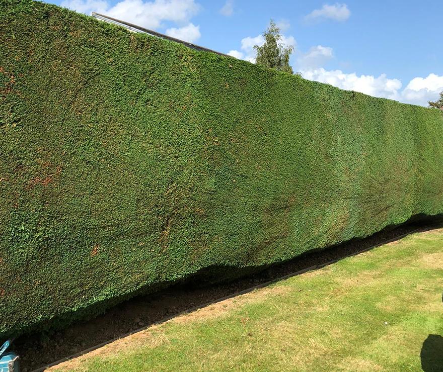 Hedge - C